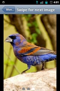 Backyard Birds Photos