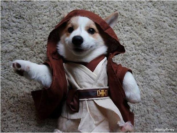dog-star-wars-costume-12
