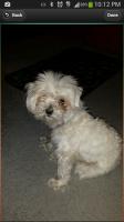POMP Pics Of My Pet - My Dog Cashmere