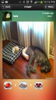 POMP Pics Of My Pet - Photo 2