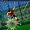 نصائح وحيل لـ لعبة Captain Tsubasa: Dream Team على جهاز الكمبيوتر